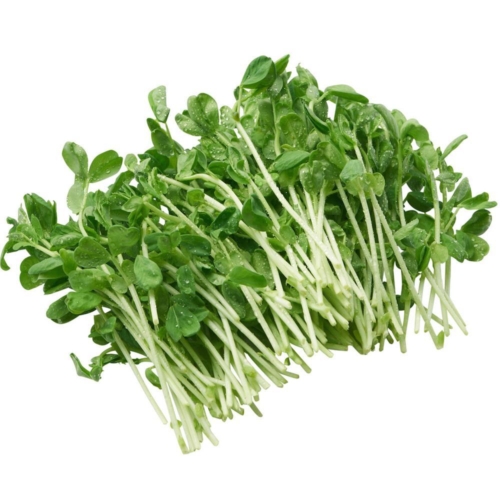 Sno Pea Sprouts